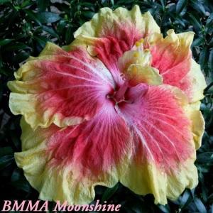 4 BMMA Moonshine