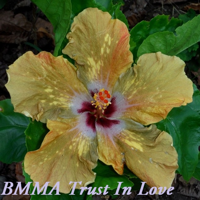 44 BMMA Trust In Love