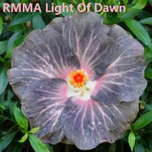 49 RMMA Light Of Dawn