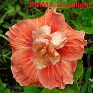 6 RMMA Torchlight