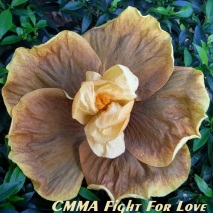 CMMA Fight For Love