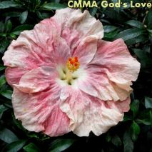 CMMA God's Love