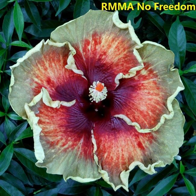 14 RMMA No Freedom