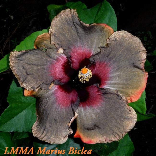 3 LMMA Marius Biclea