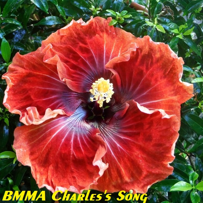 BMMA Charles's Song