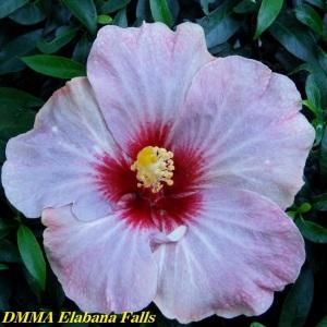 DMMA Elabana Falls