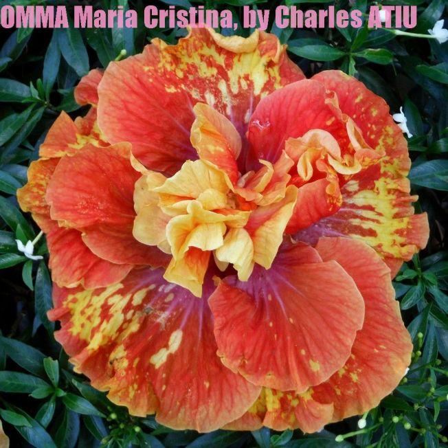 OMMA Maria Cristina