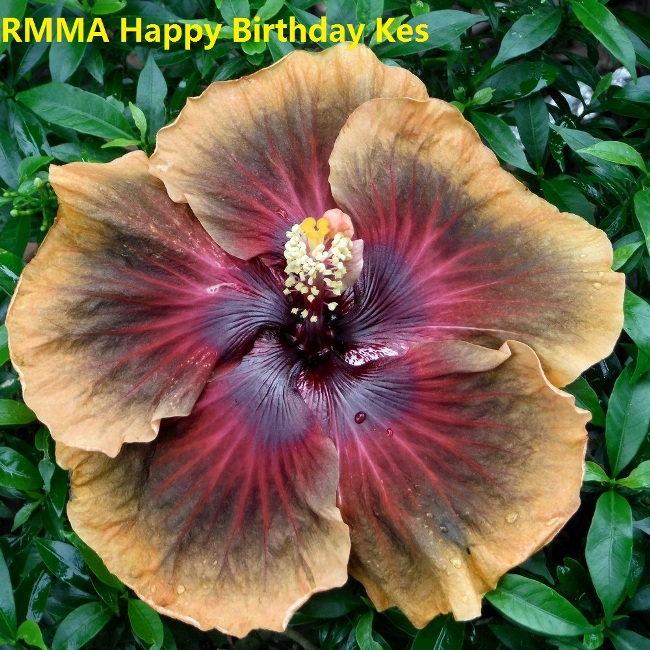 RMMA Happy Birthday Kes