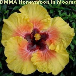 DMMA Honeymoon In Moorea