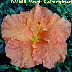 DMMA Magic Reimagined