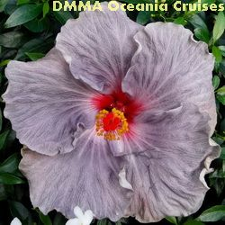 DMMA Oceania Cruises