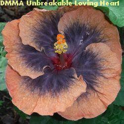 DMMA Unbreakable Loving Heart