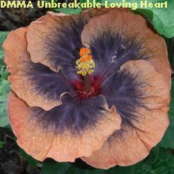 DMMA Unbreakable Loving Heart