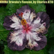 3 NMMA Dracula's Fiancée5