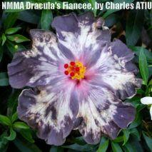 8-NMMA Dracula's Fiancée4