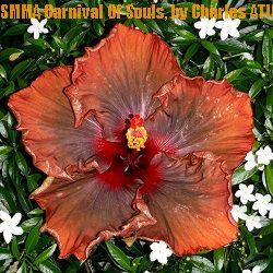 SMMA Carnival Of Souls