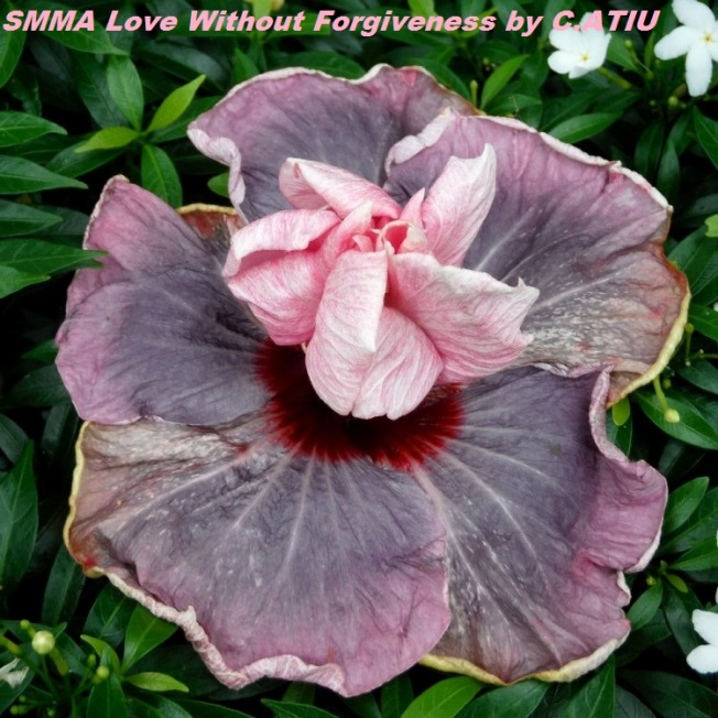 SMMA Love Without Forgiveness