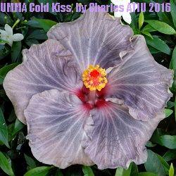 UMMA Cold Kiss