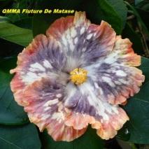 17 QMMA Fluture De Matase