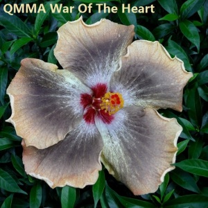 35 QMMA War Of The Heart
