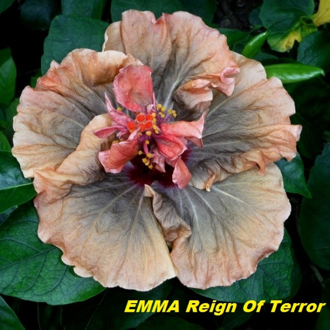 55 EMMA Reign Of Terror
