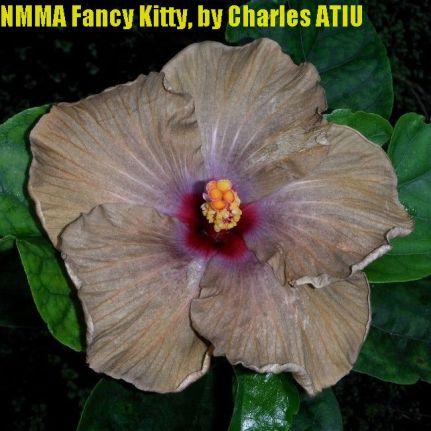 NMMA Fancy Kitty